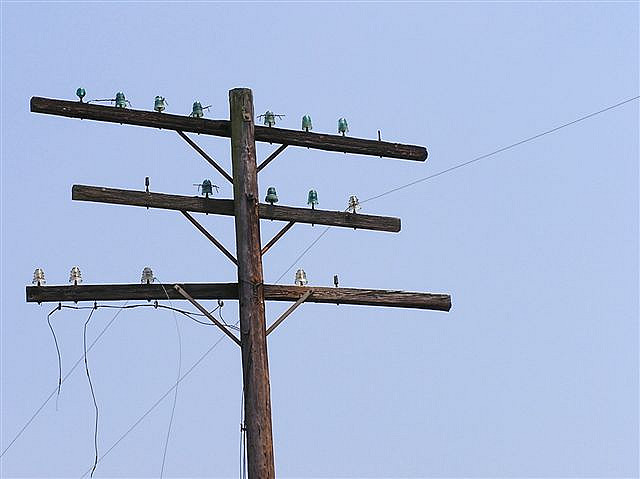 American telegraph pole. Photo by melmel80 [CC BY 2.0] via this flickr page